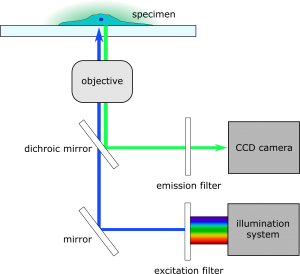 fluorescence imaging combined with SECM
